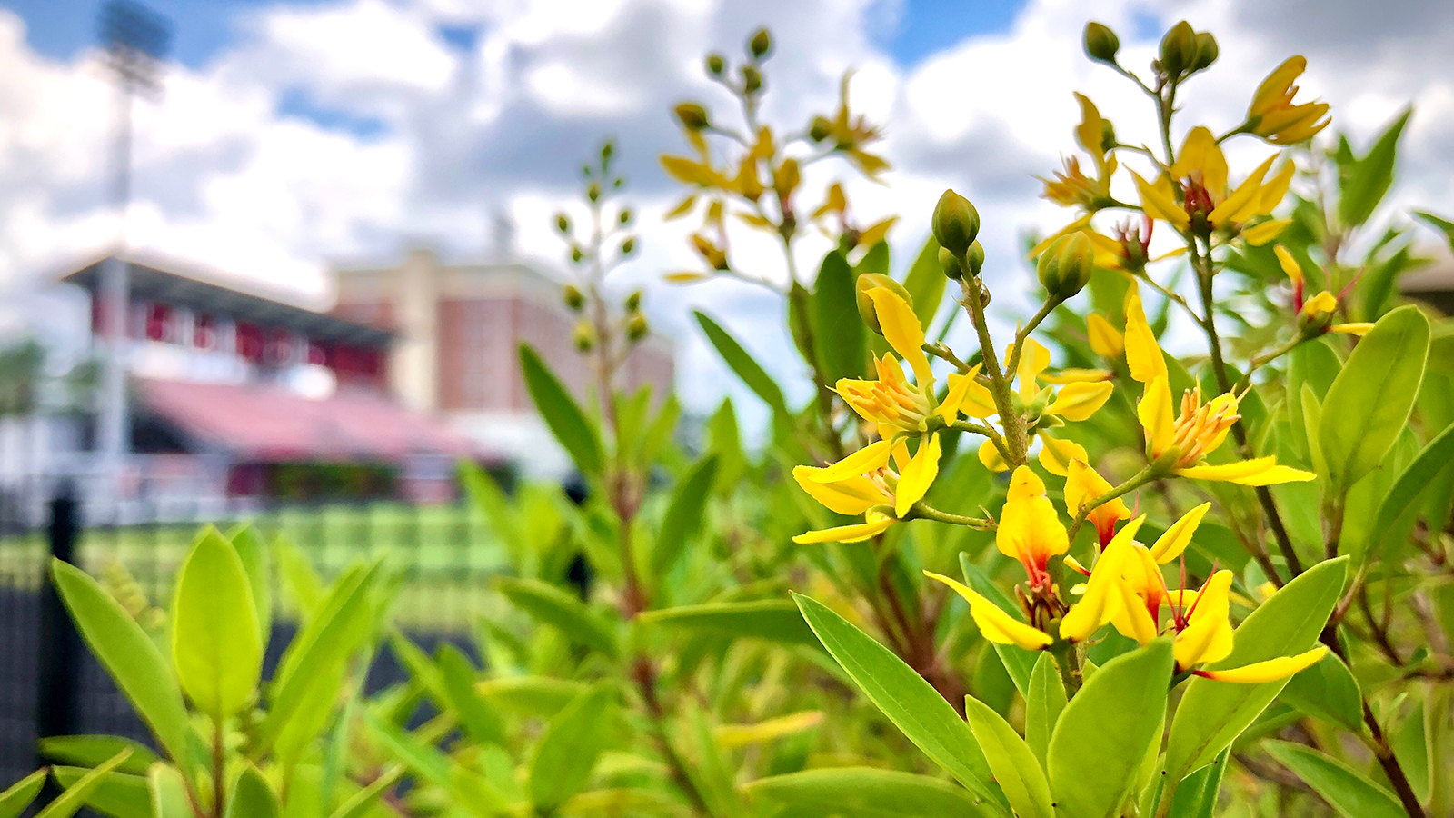 Pepin Stadium with flowers