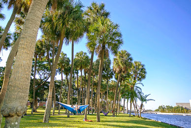 Studying here is a breeze <br/>when you can relax and read in a hammock all year long.<br/>