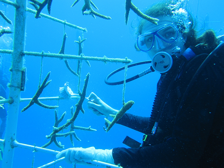 Student propagating coral